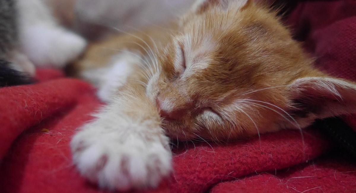 Rumah Steril: Solusi Over Populasi Kucing